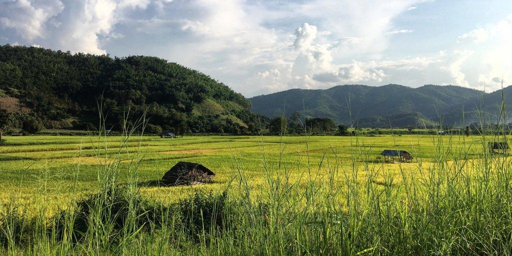 Rice paddies near Thaton village