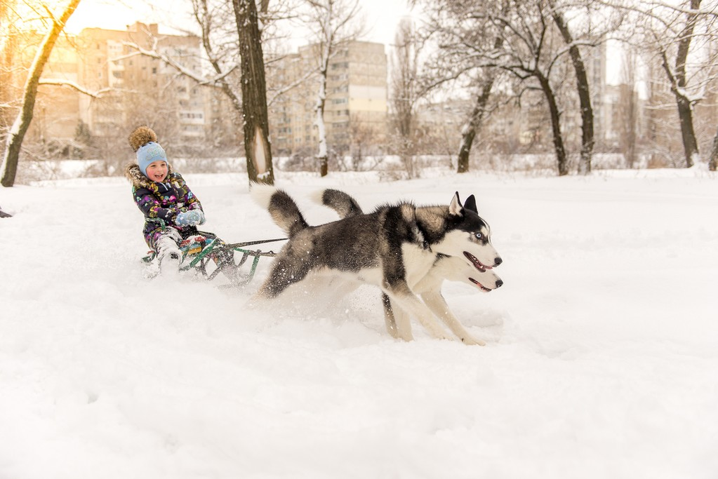 Dogsledding, Finnish Lapland