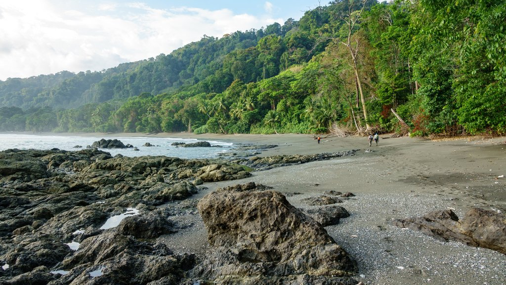 The coast of Corcovado National Park