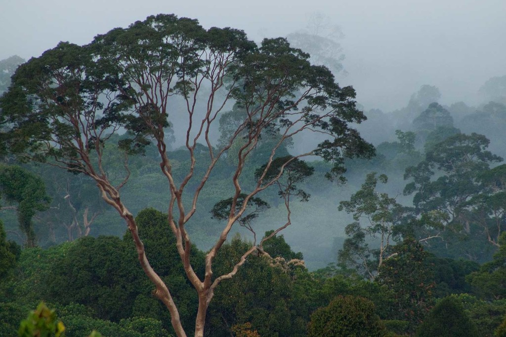 Fog covers the rainforest canopy