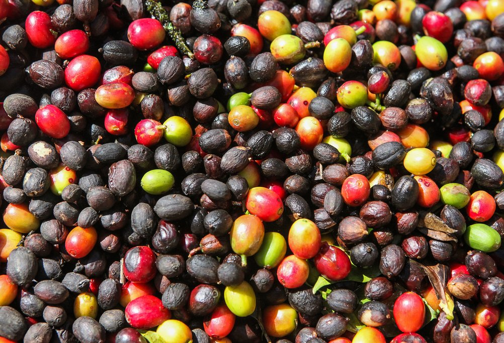 Coffee forms the backbone of this area's economy.