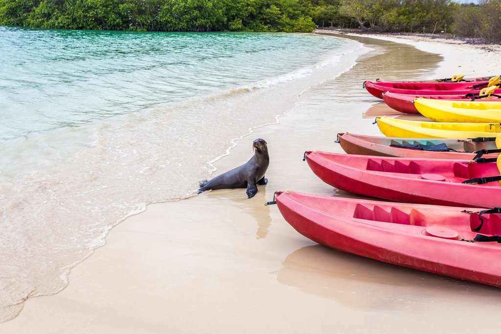 Kayaking is a great way to explore the bays and covers on the Galapagos.