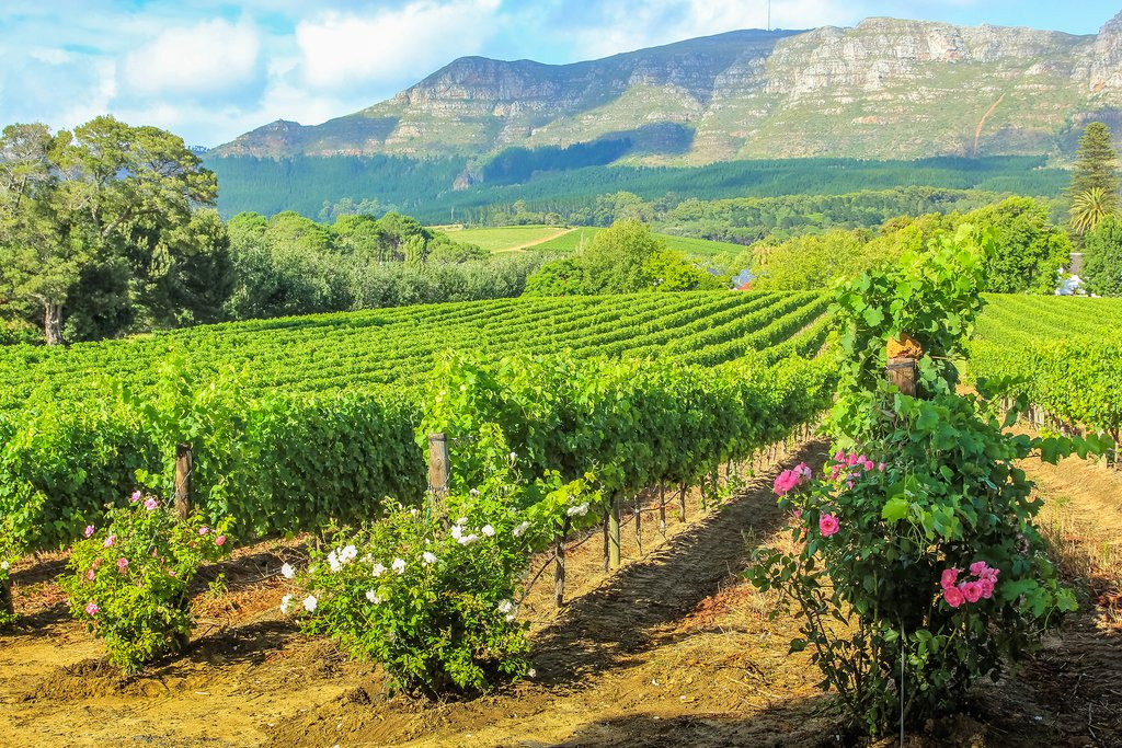 Wineries of Stellenbosch