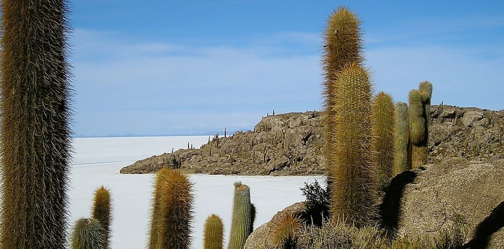 Incahuasi Island in the Uyuni Salt Flats