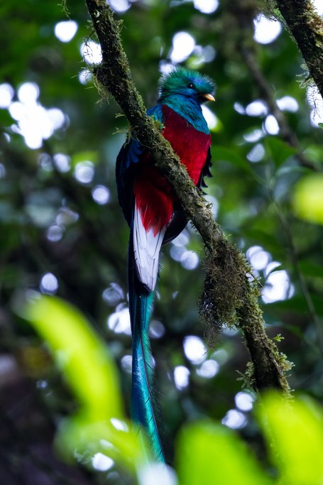 A colorful quetzal bird