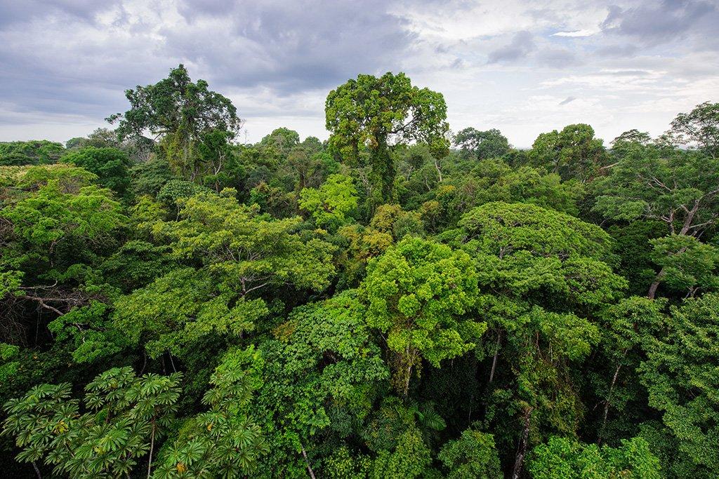 Tambopata nature reserve