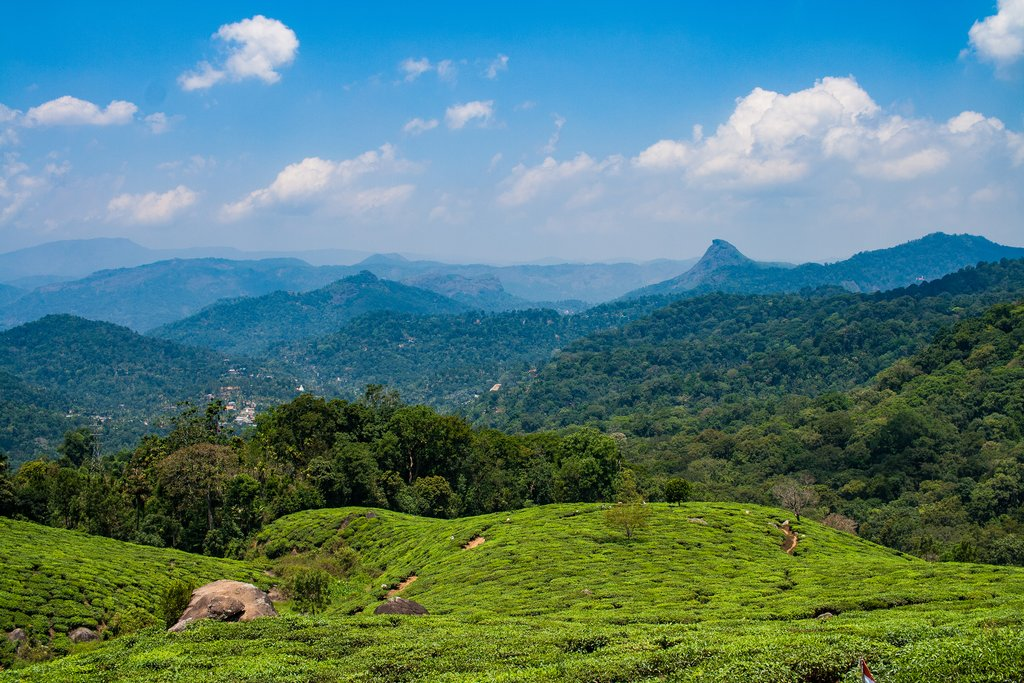 The hills of Munnar