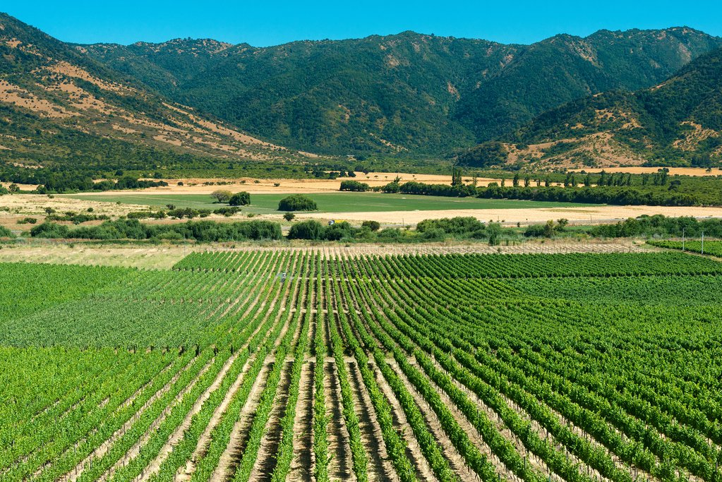 Panoramic views of a vineyard in the Colchagua Valley
