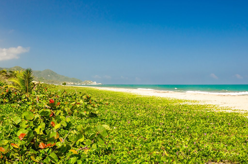 Frolic on white-sand beaches in and around Tayrona Park.