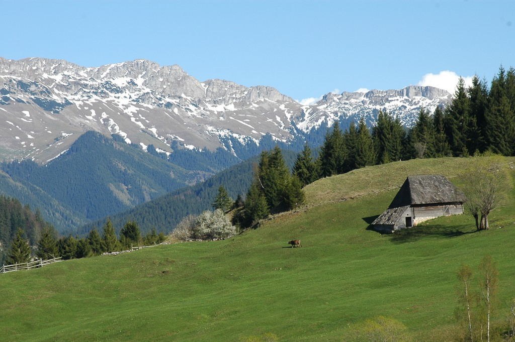 Gutanu Meadow
