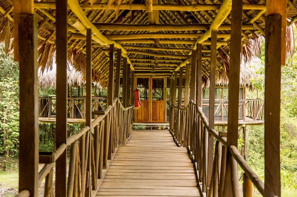 Tahuayo Lodge abuts primary jungle