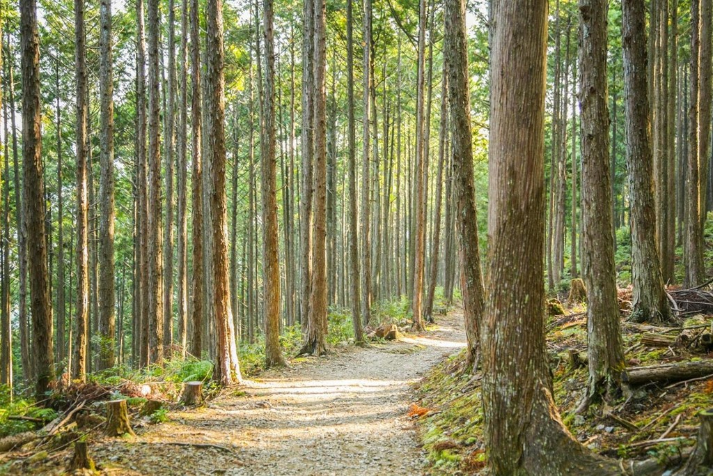 The forest trail of Kogumotori-goe