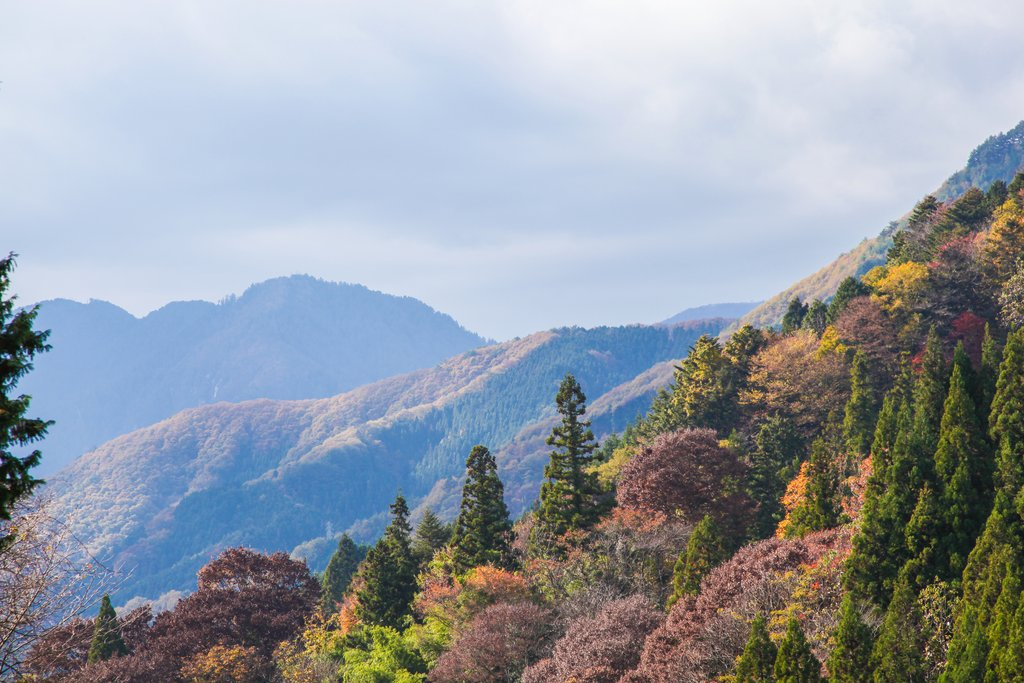 Your walk along Japan's historic trail network will take you through bamboo and cedar forests