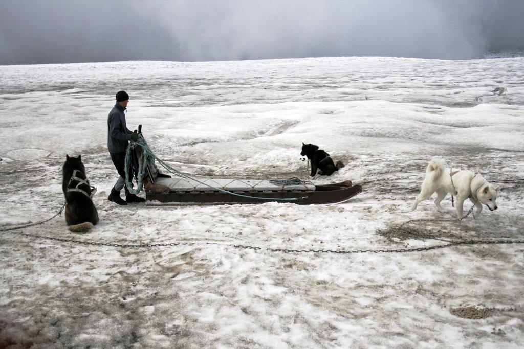 Dog Sled Team on Glacier