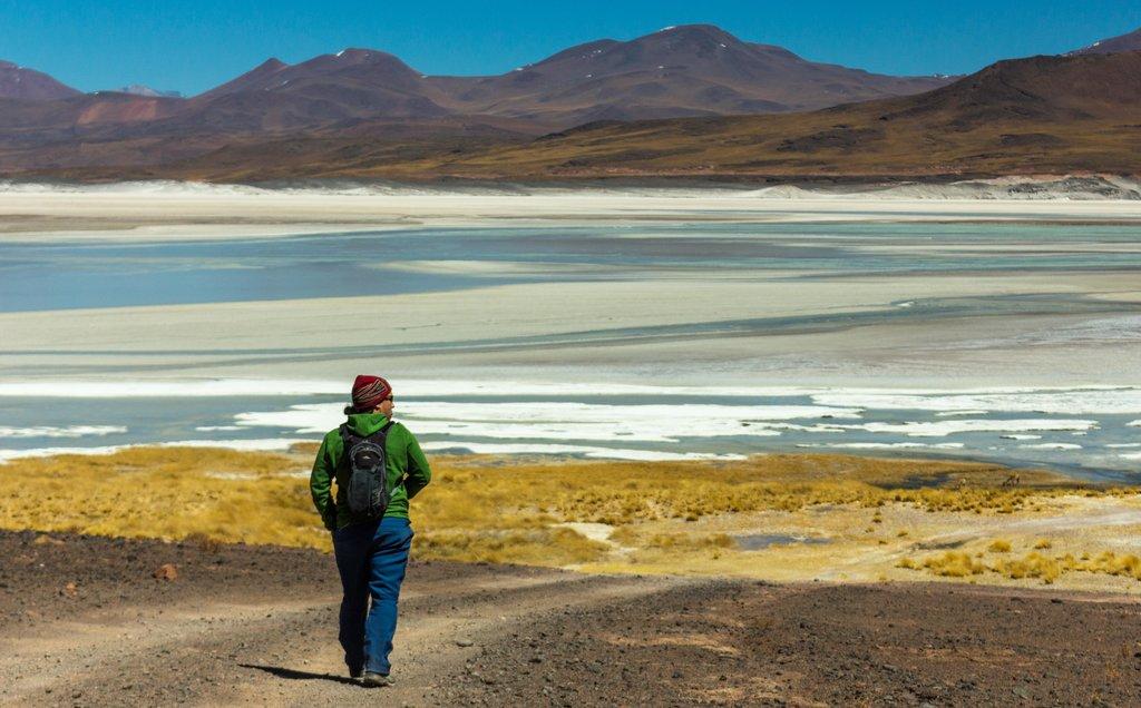 Atacama Salt Flat, a habitat for flamingoes