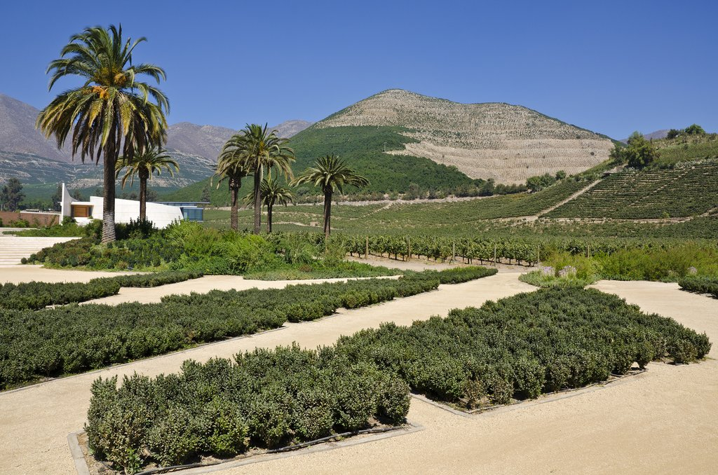A vineyard setting in the Aconcagua Valley