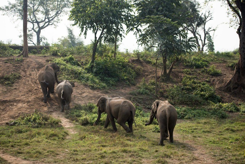 Elephants grazing in the grasslands