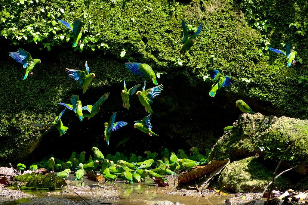 Parrot Clay Lick Cave