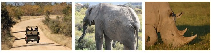 Safariing in Addo Elephant Park