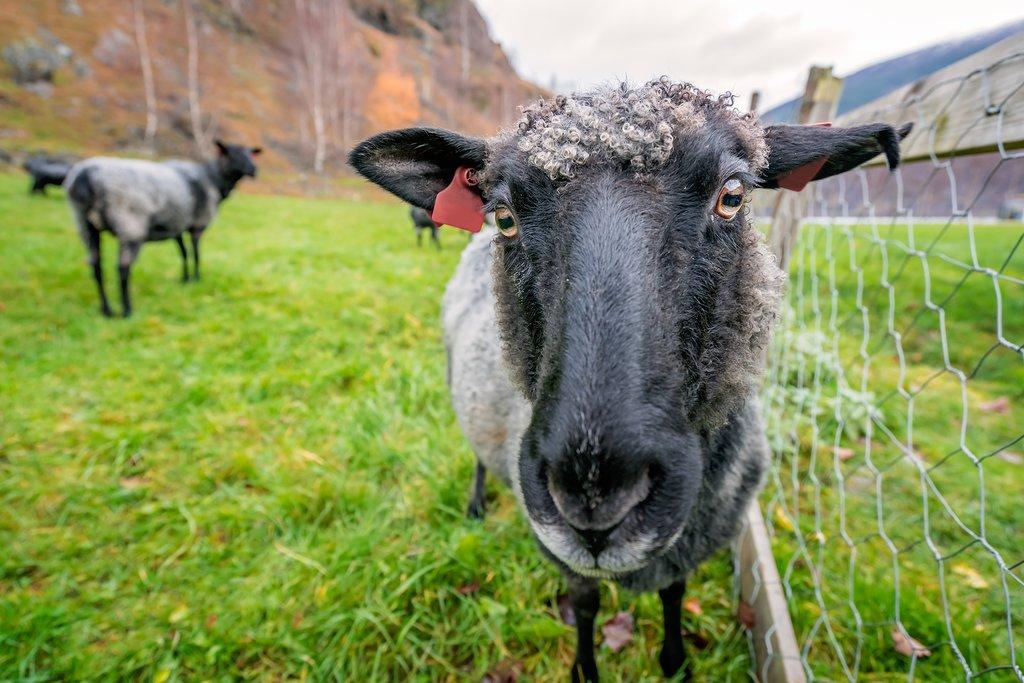 Farm life, rural Norway