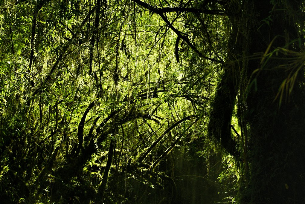 Lush undergrowth of the  Alerce Andino National Park