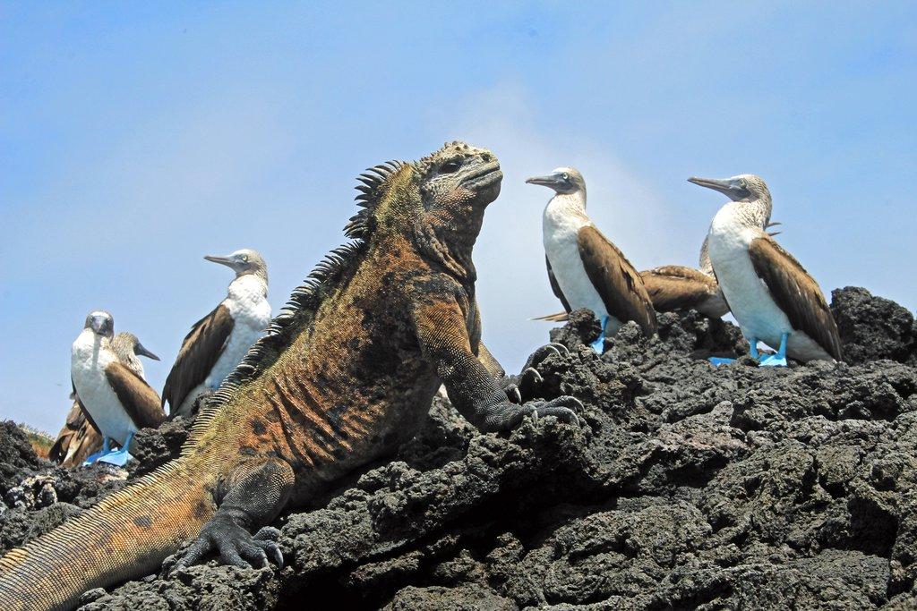 Galápagos creatures