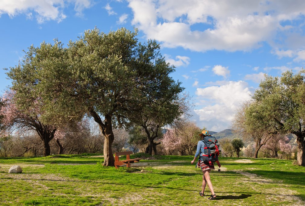 Life among the olive groves