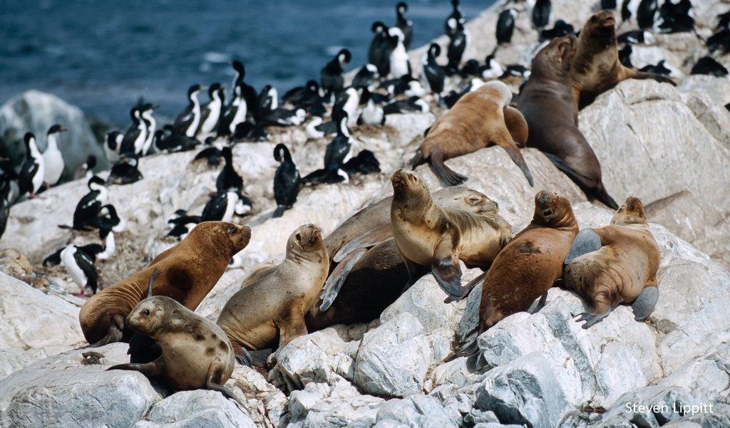 Fur seals and cormorants