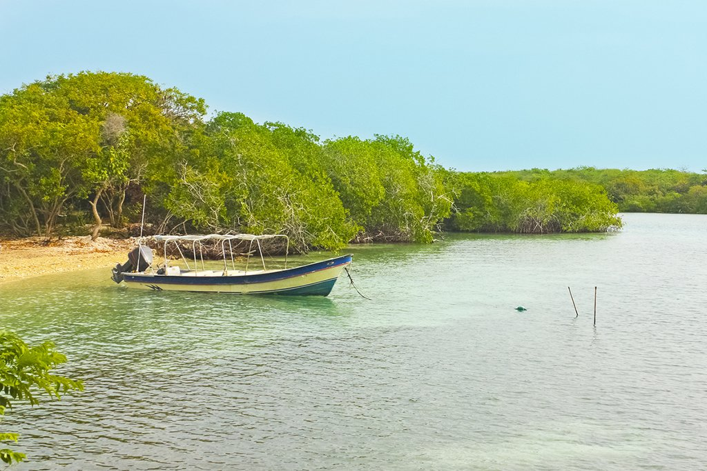 Mangrove forests near Cartagena