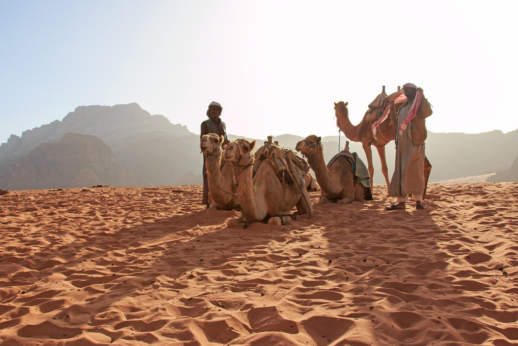Bedouins and Camels in Wadi Rum