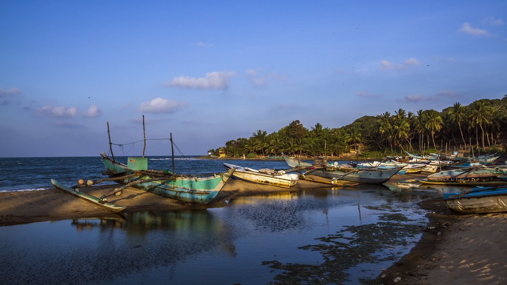 Traditional fishing boats docked at Arugam Bay