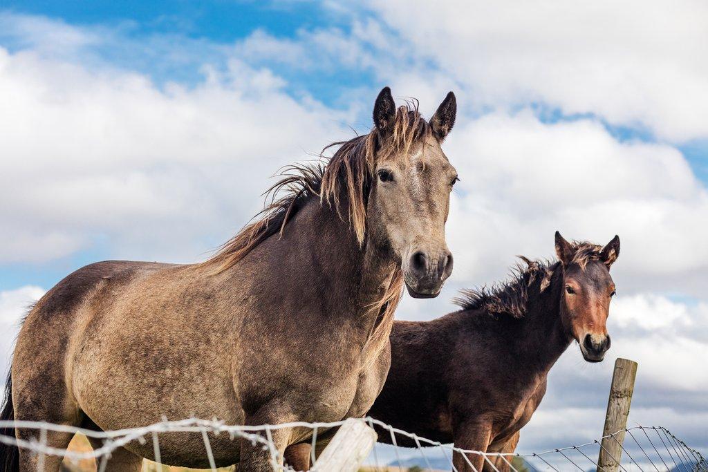 Horses in Ireland