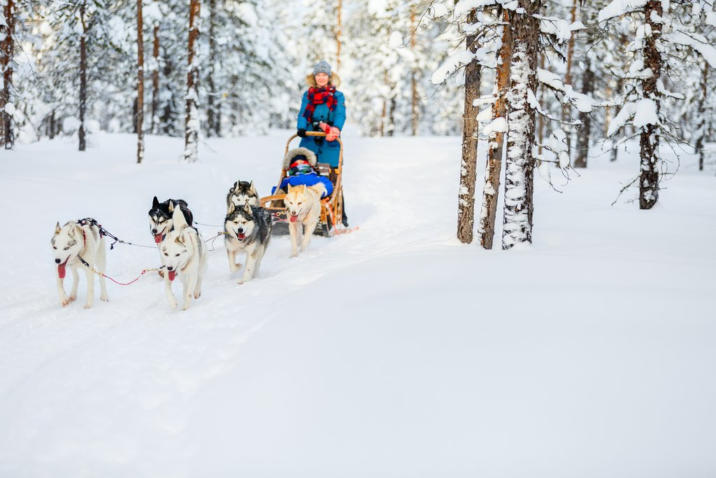 Mushing with huskies