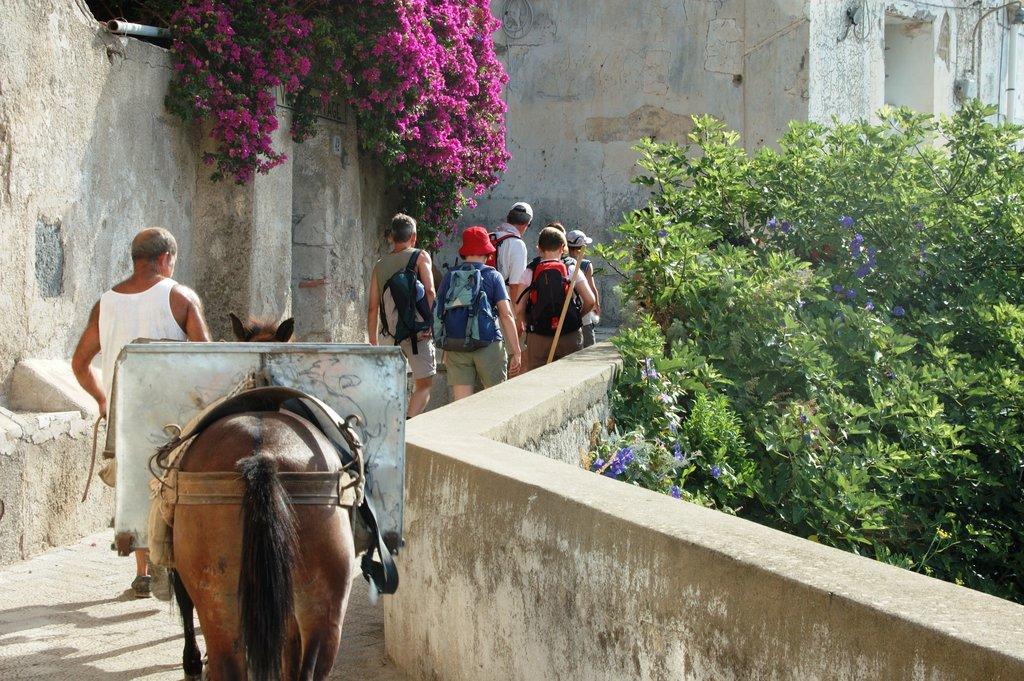 Donkey in Capri
