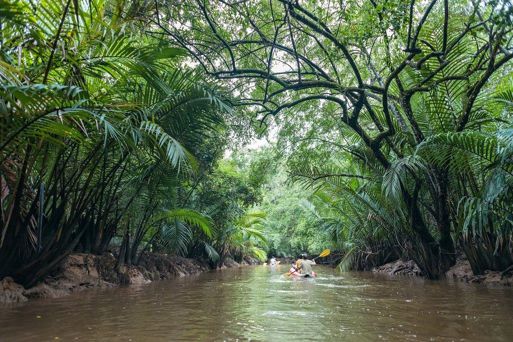 Jungle mangroves in Phang Nga.