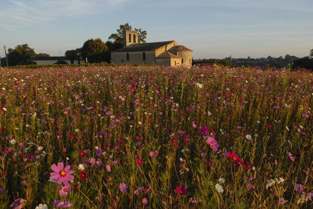 Wildflowers in Gironde