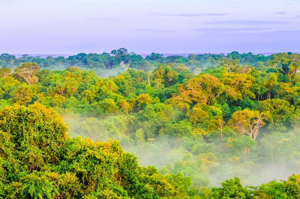 View of the Amazon