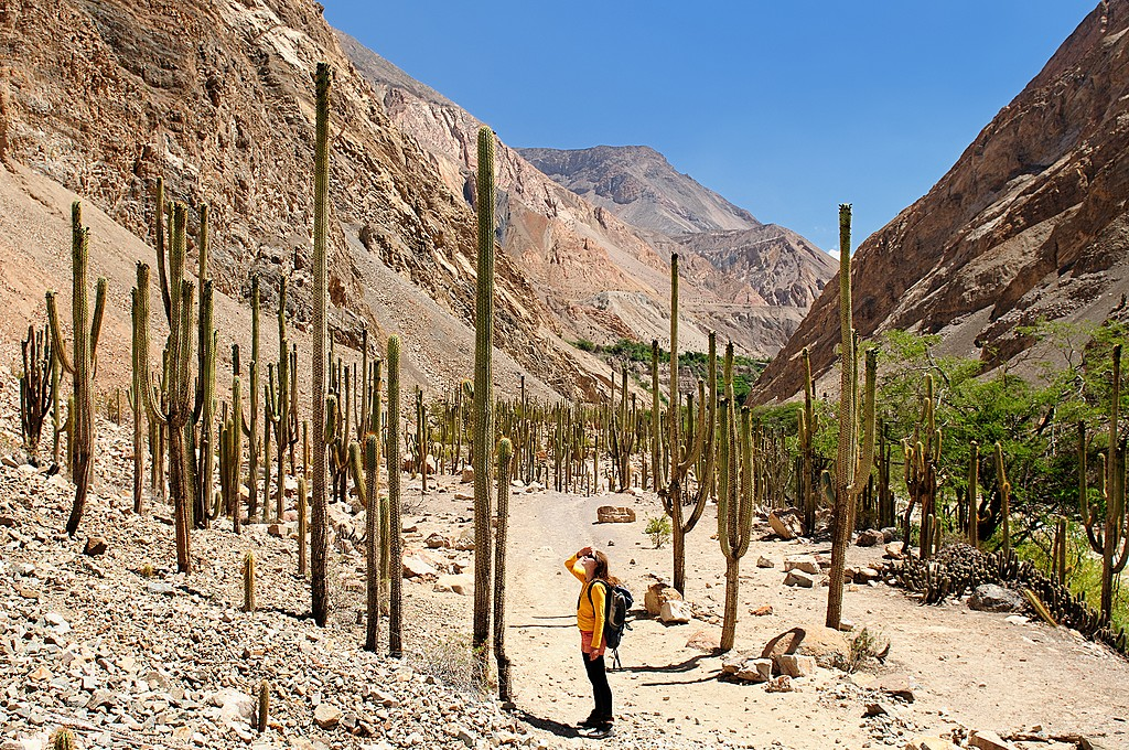 Tourist trekking in Cotahuasi Canyon