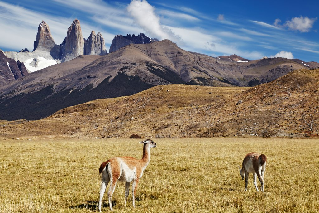 Patagonia Wildlife Adventure - 6 Days