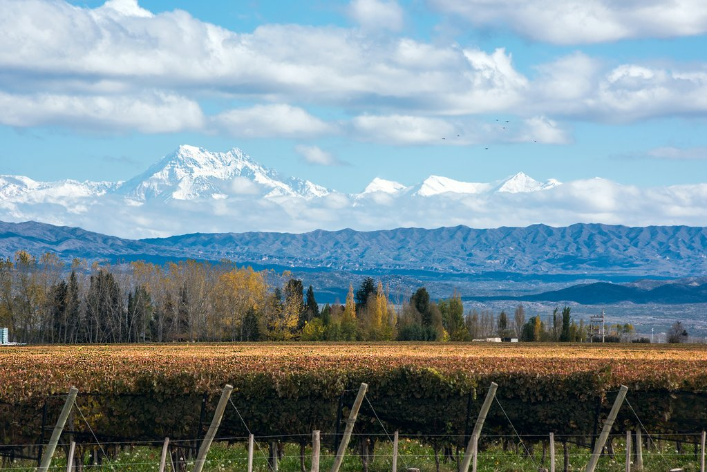 Vineyard in Mendoza