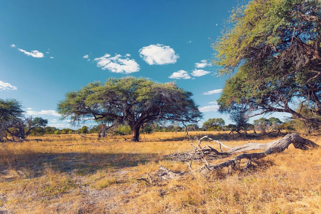 Landscape within Moremi Reserve