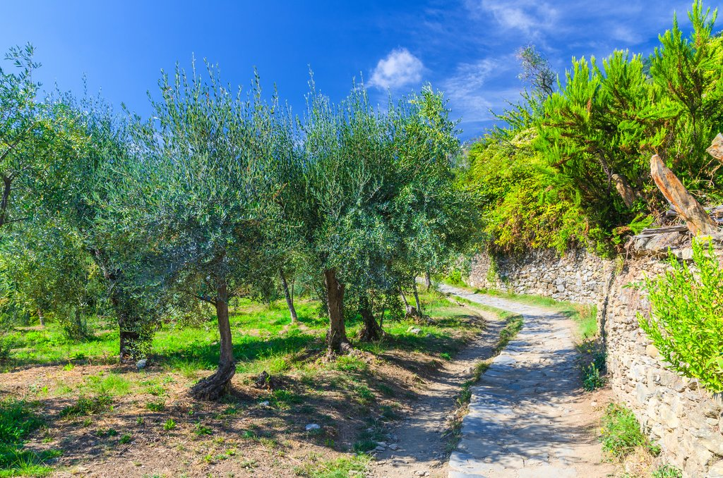 Walking path through an orchard