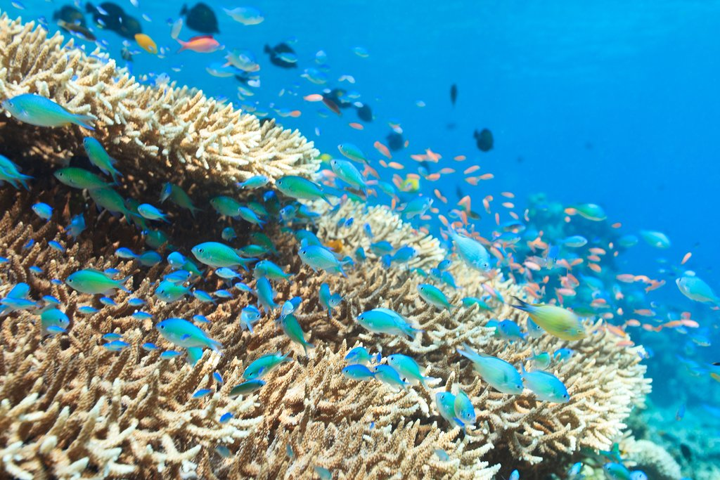 Snorkel amid colorful wildlife in Bunaken National Marine Park