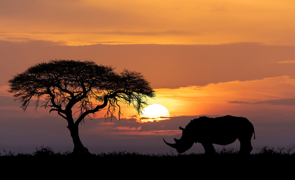 Rhino at sunset