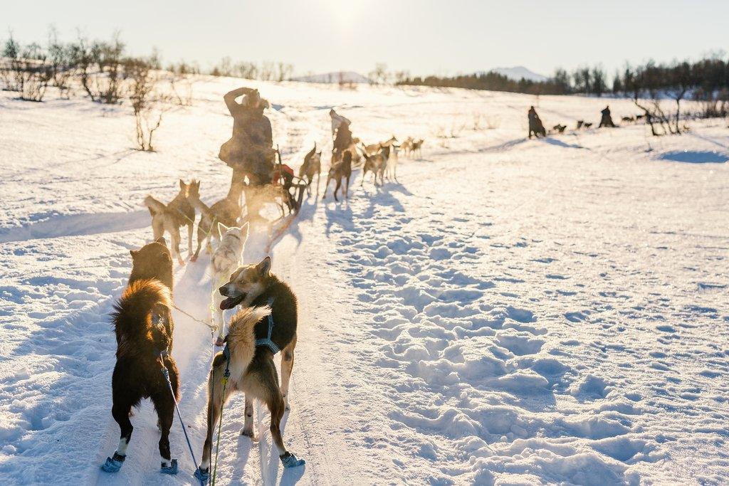 A dogsledding team in Northern Norway