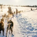 Multi- Day Dogsledding Adventure from Tromsø - 7 Days