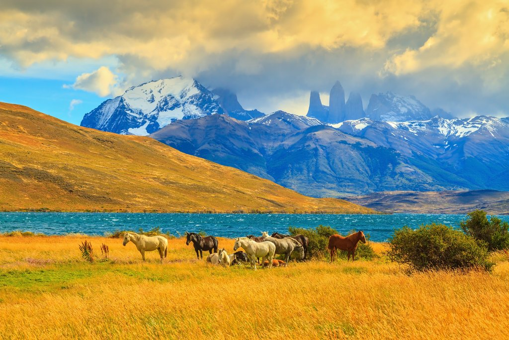 Grazing Mustangs in Chile's Laguna Azul