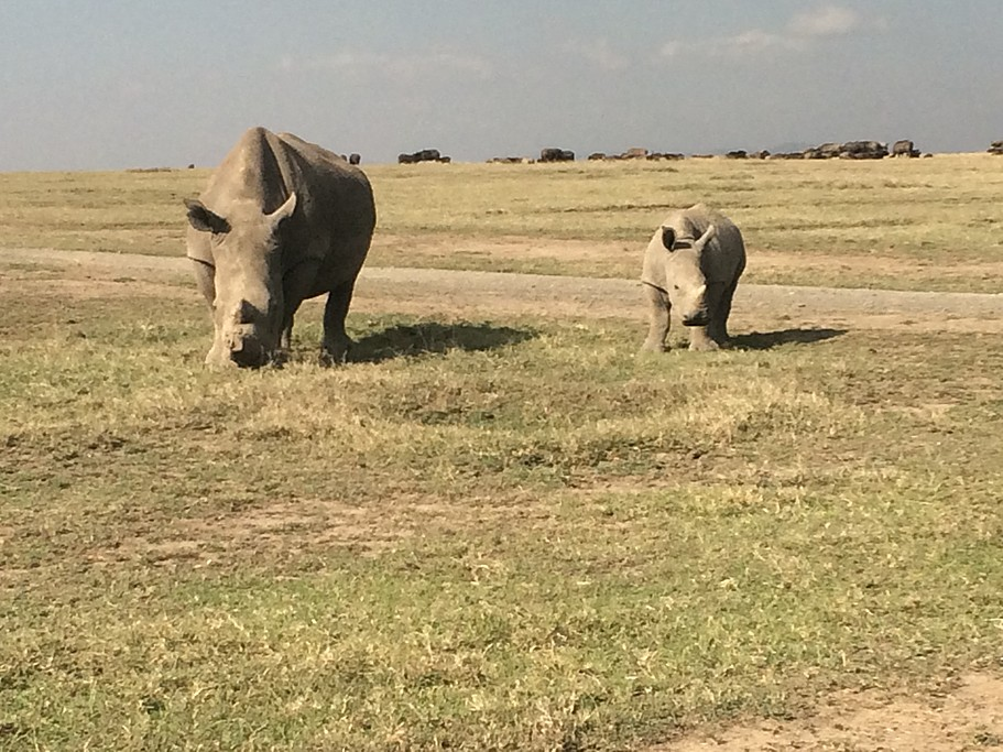 Come face to face with  rhinos