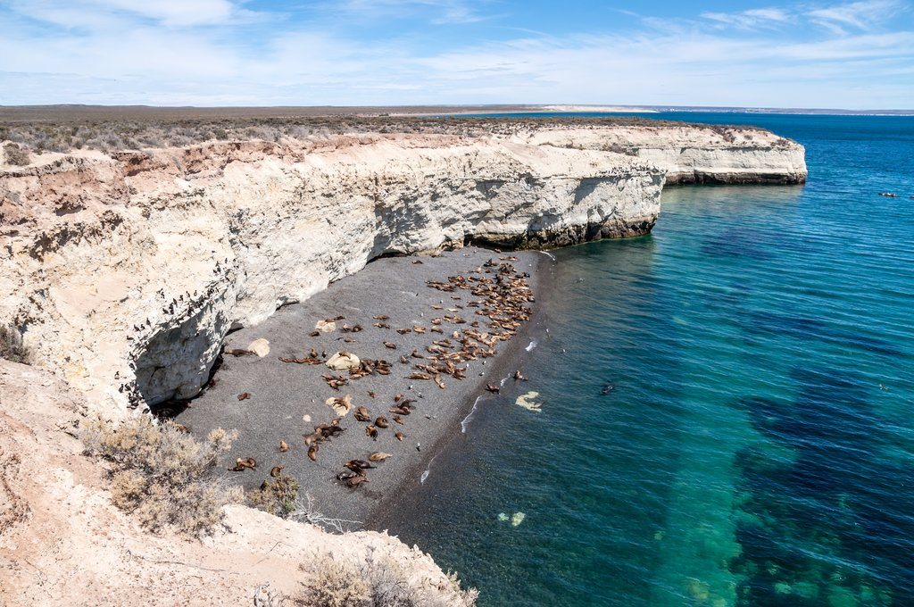 Ultimate Guide to Puerto Madryn: Wildlife Hub of Argentine Patagonia