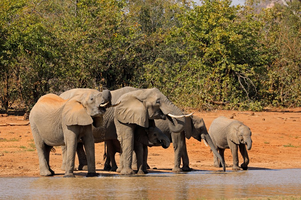 Elephant family in Kruger